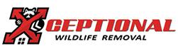 New Port Richey Wildlife Removal